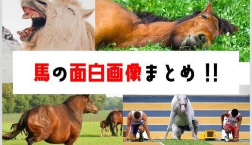 馬の面白画像50選まとめ!