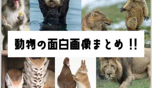 動物の面白画像200選まとめ!