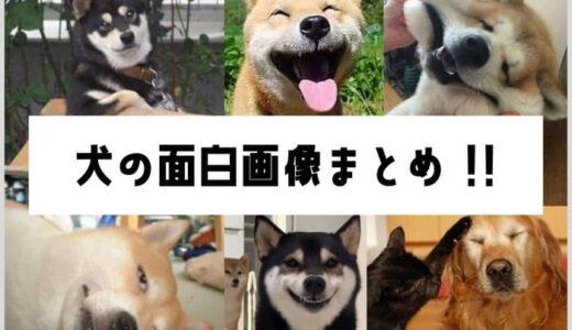 犬のおもしろ画像140枚まとめ!