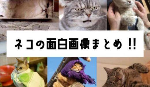 猫のおもしろ画像120選!一挙紹介!